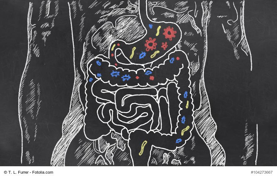 Darm, wohlfühlen, Bauch, Detoxing, Entgiften, Kräuter, Obst, Hormone