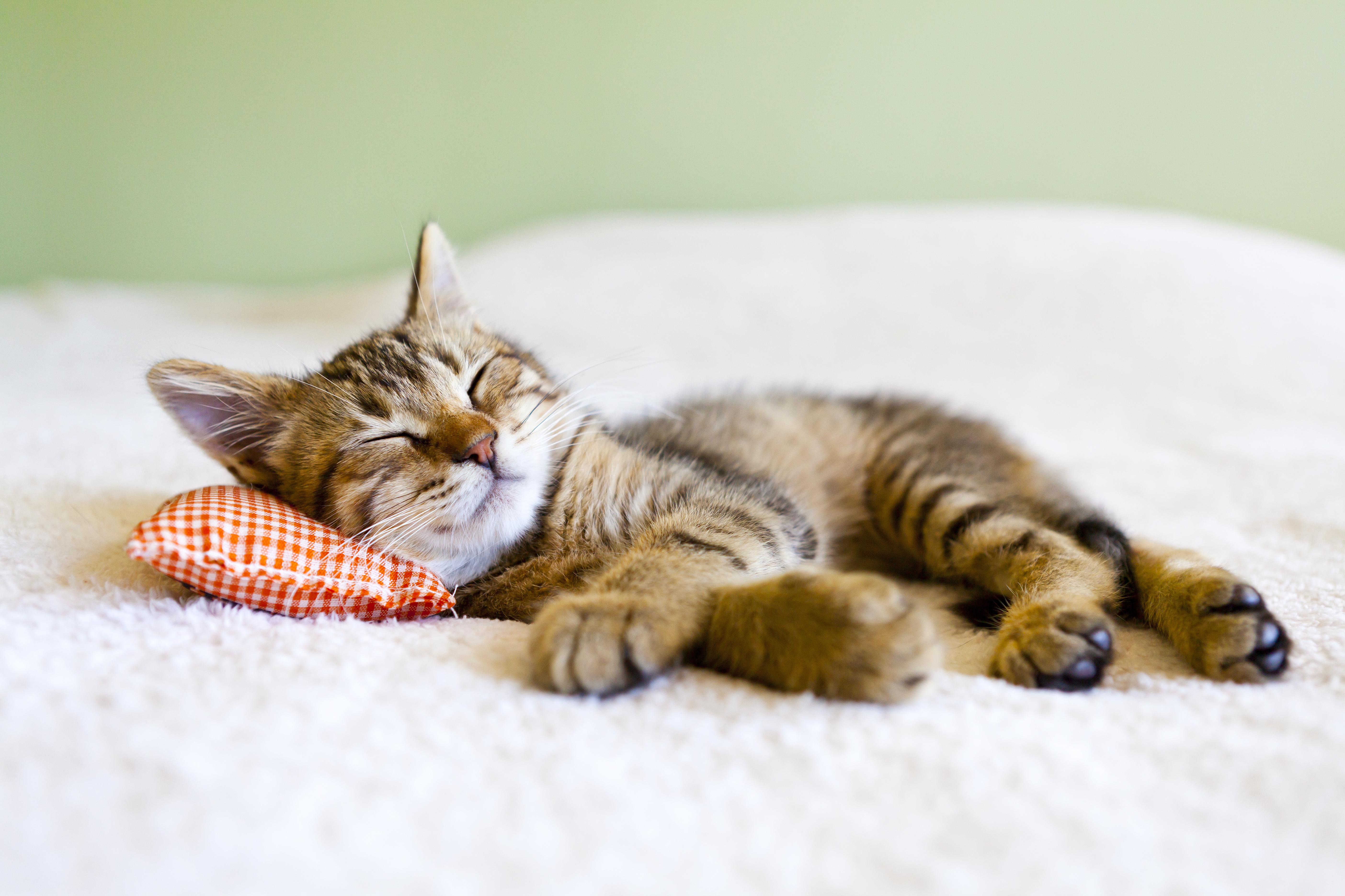 Schönheitsschlaf, Leben, schön, fit, Lifestyle, schlafen, Toni Klein